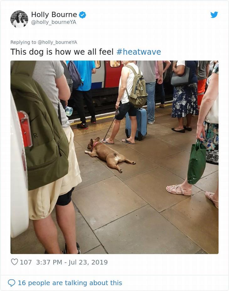 UK heatwave response funny dog