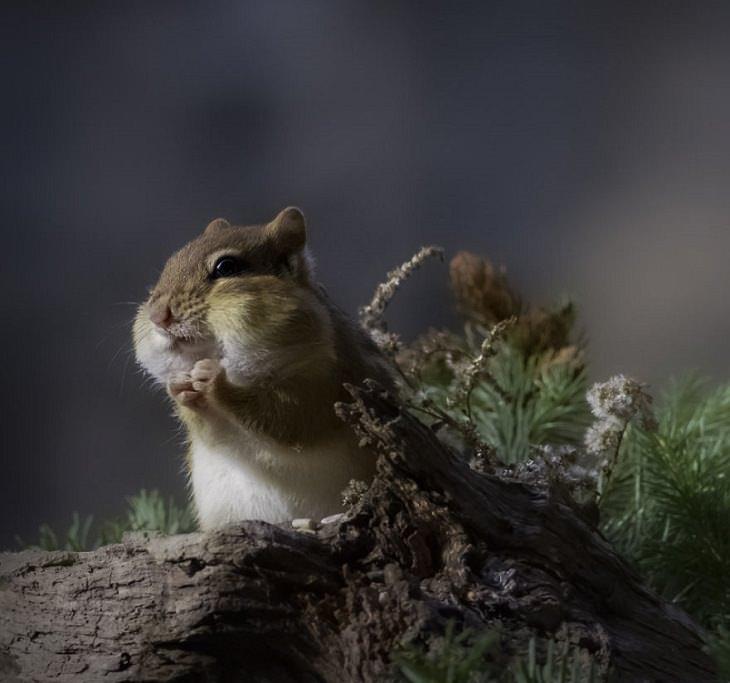 15 Fotografías De La Naturaleza Captadas Por Susan Hartman una pequeña ardilla