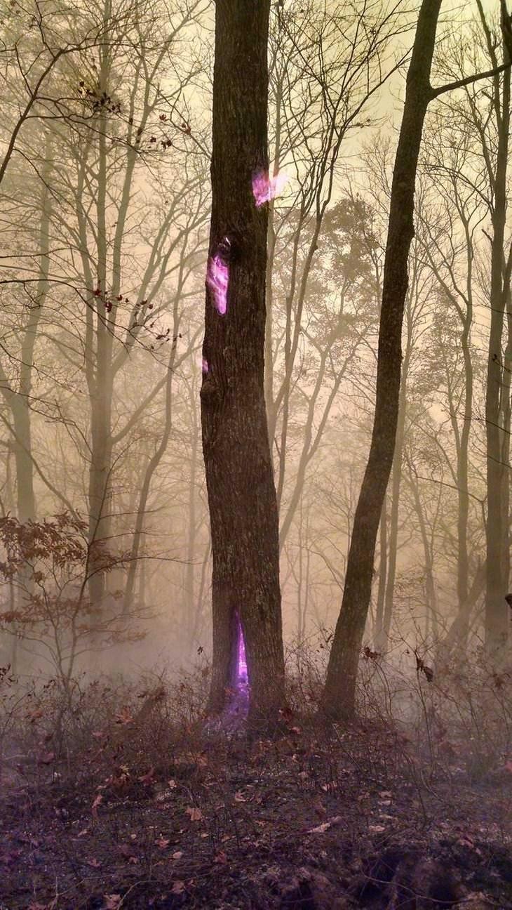 2. Durante un incendio forestal, un trabajador forestal capturó esta foto de un árbol quemándose desde el interior. Las llamas reales del fuego eran tan calientes que parecían neón morado