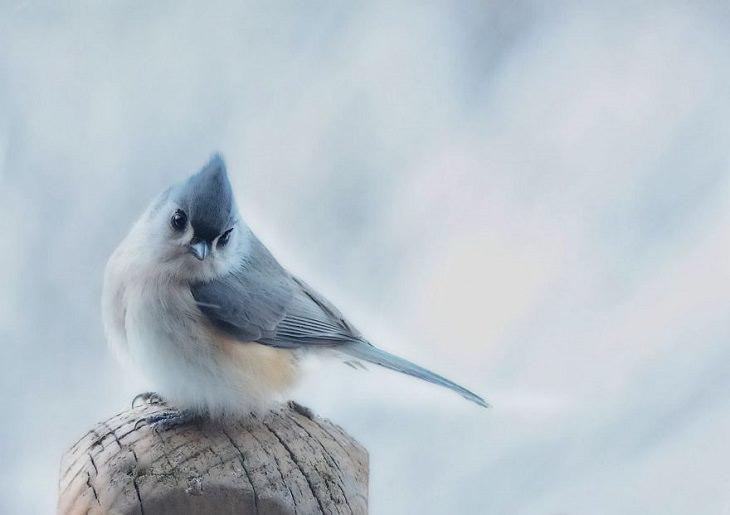 15 Fotografías De La Naturaleza Captadas Por Susan Hartman un herrerillo bicolor