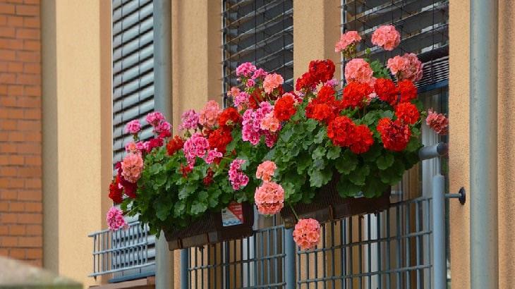 10 Espectaculares Flores Que Puedes Plantar En Tu Jardín ¿Cómo elegir la flor correcta?