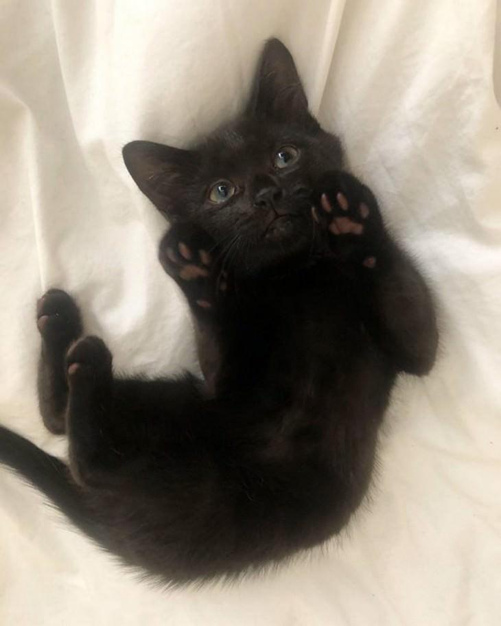 16 Imágenes Tiernas De Gatitos Que Derretirán Tu Corazón gatito negro