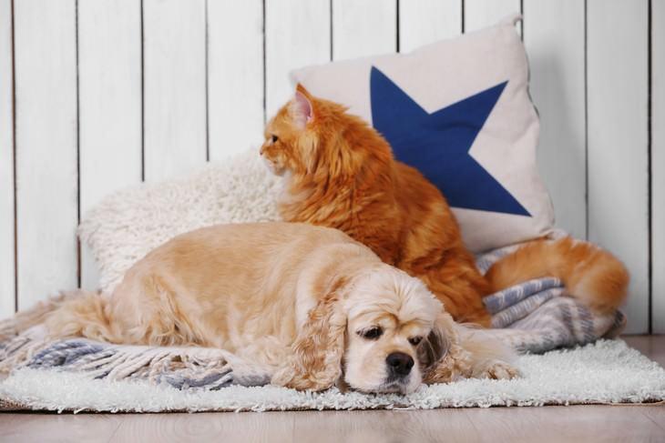 Principales Causas y Soluciones Para Las Alergias Invernales Caspa de mascotas