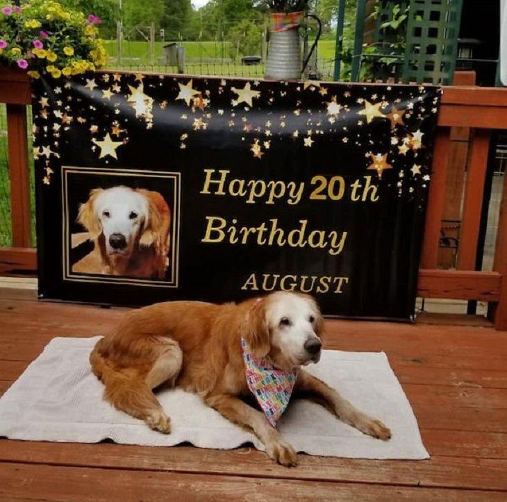 17 Conmovedoras Fotos De Perros Ancianos golden Retriever cumpleaños 20