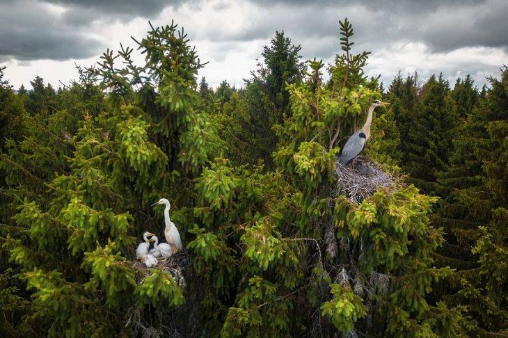 """2. Ganador de la categoría de vida silvestre: """"Donde viven las garzas"""" de Dmitrii Viliunov Fotos de Drone, garzas"""