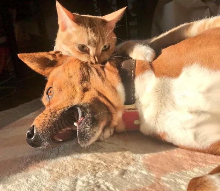 Divertidas Fotos De Perros Que Han Sido Dominados Por Gatos gato mordiendo a un perro