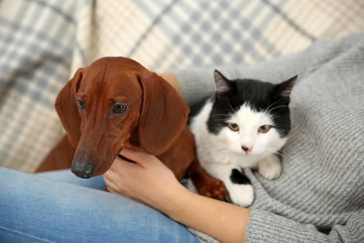 Estafa en línea Covid-19 engaño por mascotas
