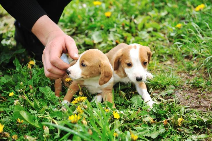Estafa en línea Covid-19 estafa de mascotas