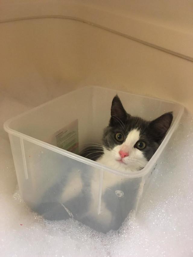 Lógica De Los Gatos Gato en la bañera