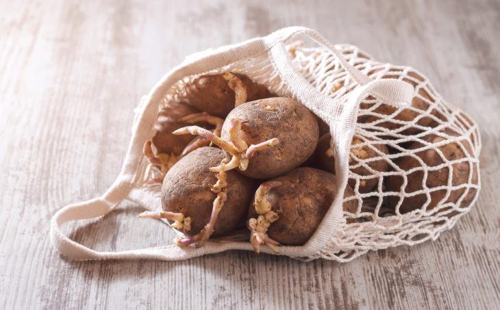 Por qué puede ser peligroso comer papas con brotes germinados
