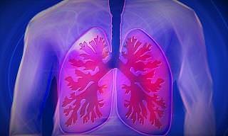 7 Posts Pulmones