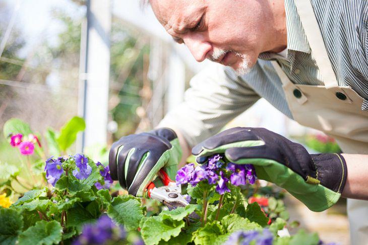 Cuidado De Tus Plantas Interiores Durante El Invierno Poda tus plantas correctamente