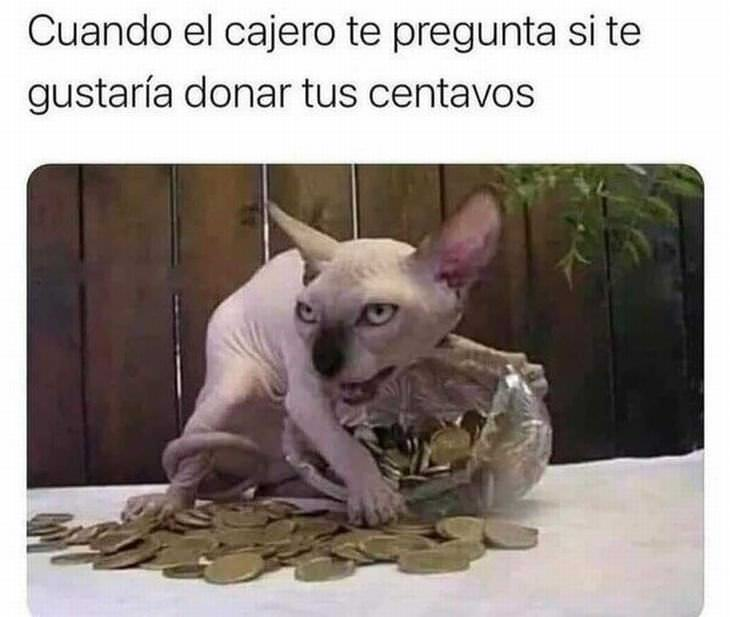 Memes Graciosos Para Alegrar Tu Día Gato con monedas de oro
