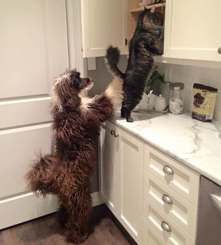 Imágenes Empatía Animal Gato buscando golosinas