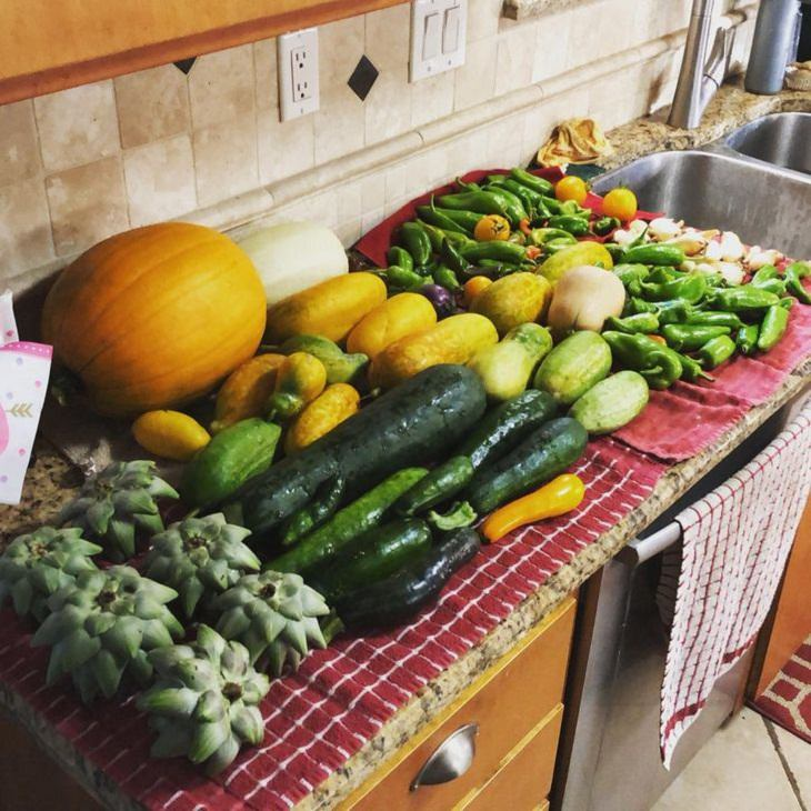 Frutas y Verduras Gigantes Cosecha