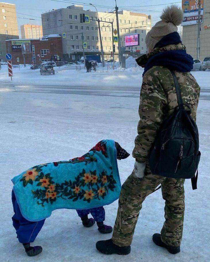 Temporada De Invierno En Rusia Perro cubierto con una manta