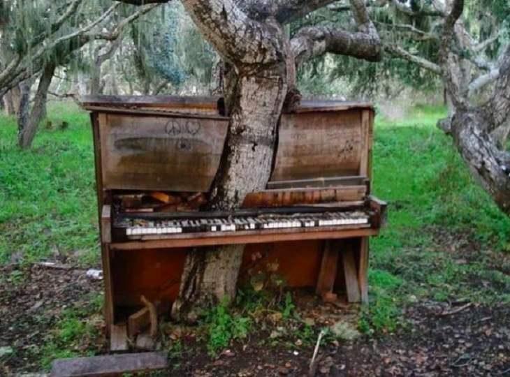 Imágenes Dominio De La Naturaleza Piano