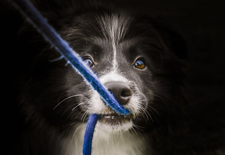 Fotos De Animales Perfectamente Sincronizadas Perro sosteniendo una cuerda