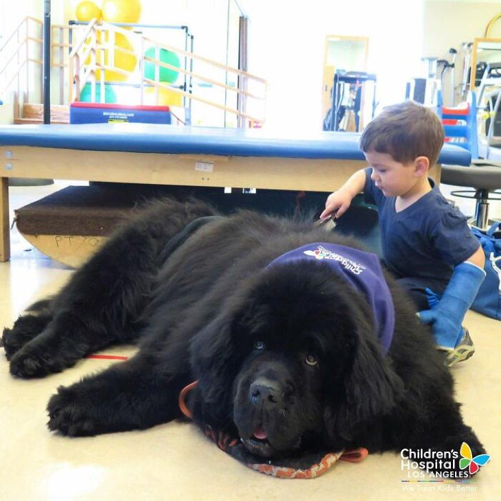 Enormes perros, clínica de rehabilitación