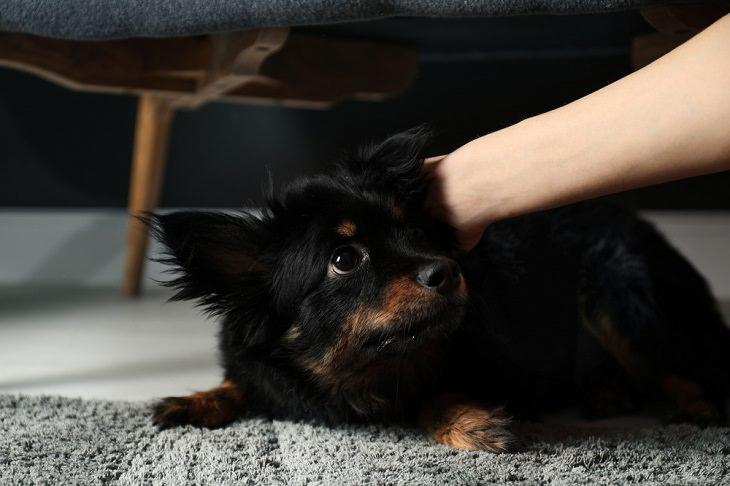 Causas De Estrés En Perros Usar lentes de sol o sombreros frente a tu perro puede estresarlo