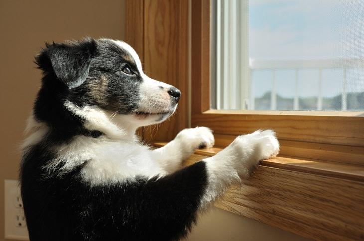 Causas Estrés En Perros 1. Dejar a tu perro solo demasiado tiempo puede provocar ansiedad por separación