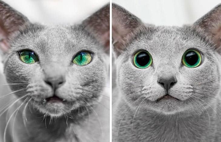 2. Las pupilas de un gato pueden ser completamente redondas durante la noche y estrechas a una ranura delgada durante el día.