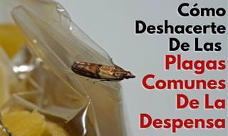 7 Posts Deshacerte De Los Insectos