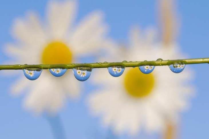Fotos Belleza De Nuestro Mundo Flores que se reflejan en el rocío de la mañana