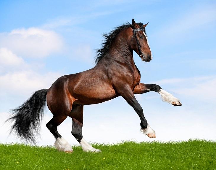 7 Historias De Animales Que Salvaron a Personas De La Muerte El caballo Kerry