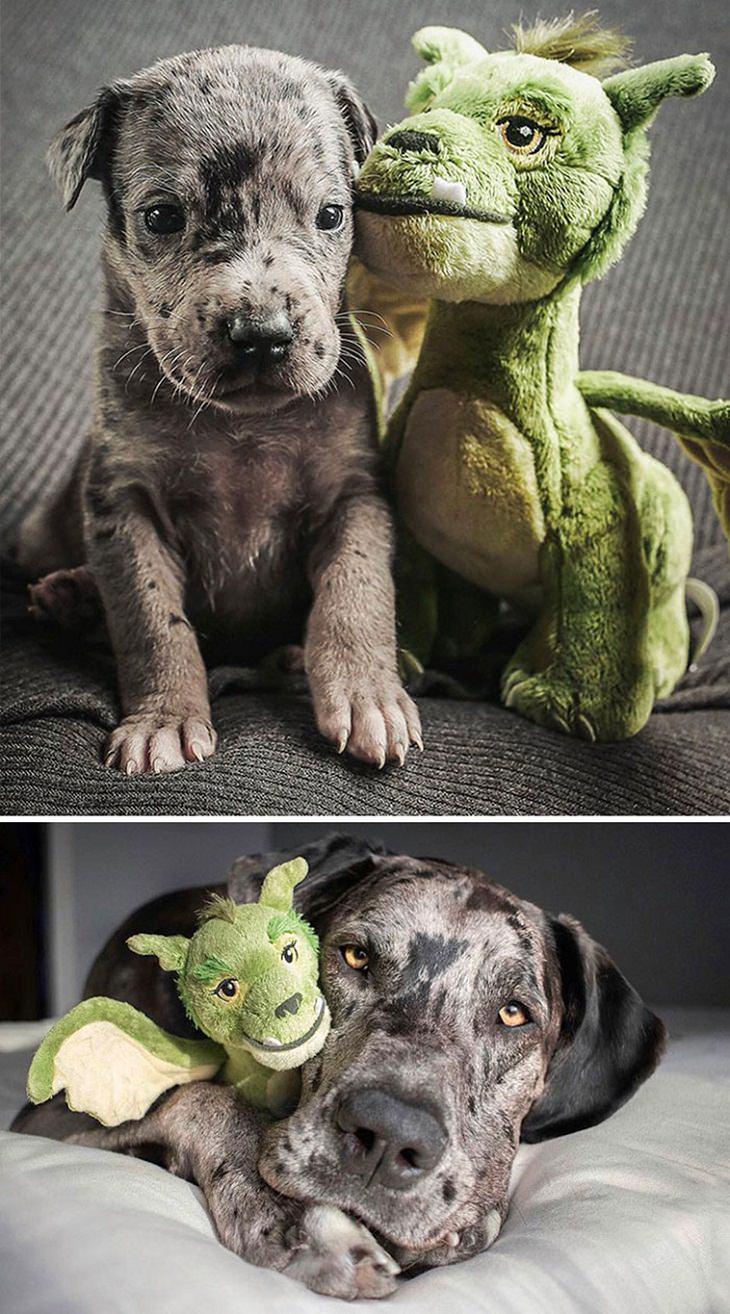 1. En la imagen superior, el cachorro tenía solo cuatro semanas y la de abajo fue tomada dos años después. En ambos, está con su peluche favorito ...
