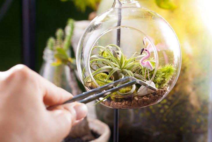 Plantas Ideales Para Espacios Pequeños Plantas de aire (Tillandsia)
