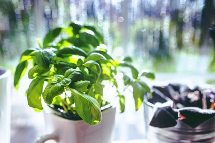 Plantas Ideales Para Espacios Pequeños Hierbas de cocina