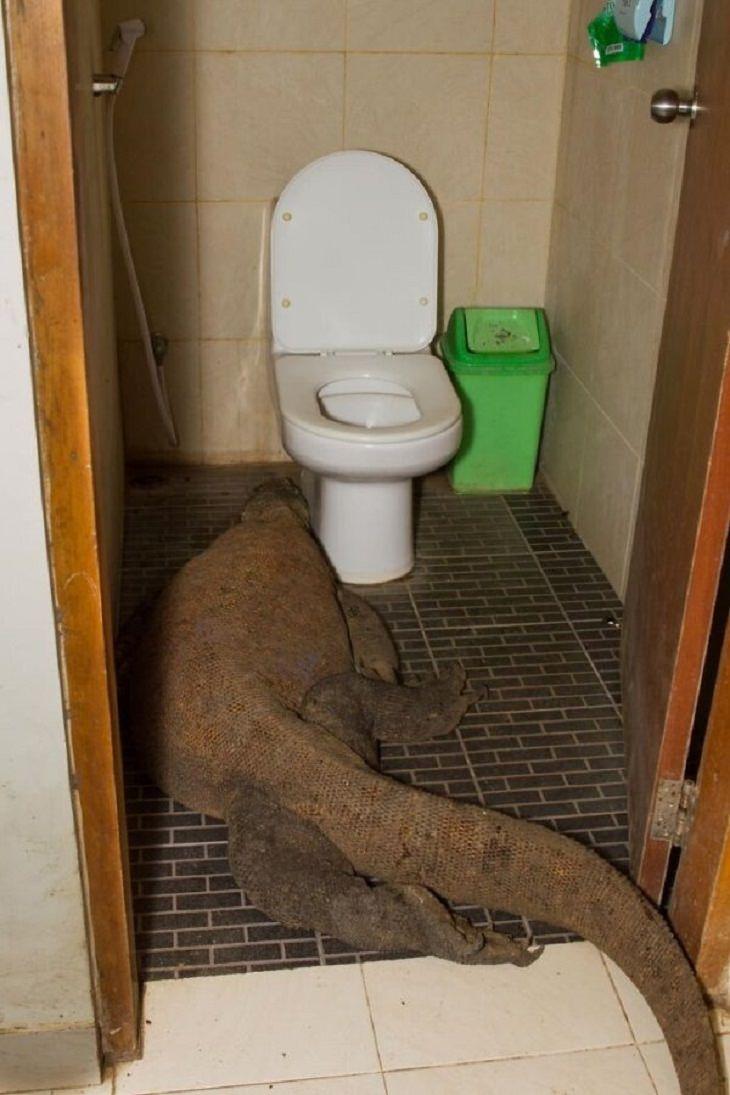 1. Imagínate despertar con esta vista en su baño.