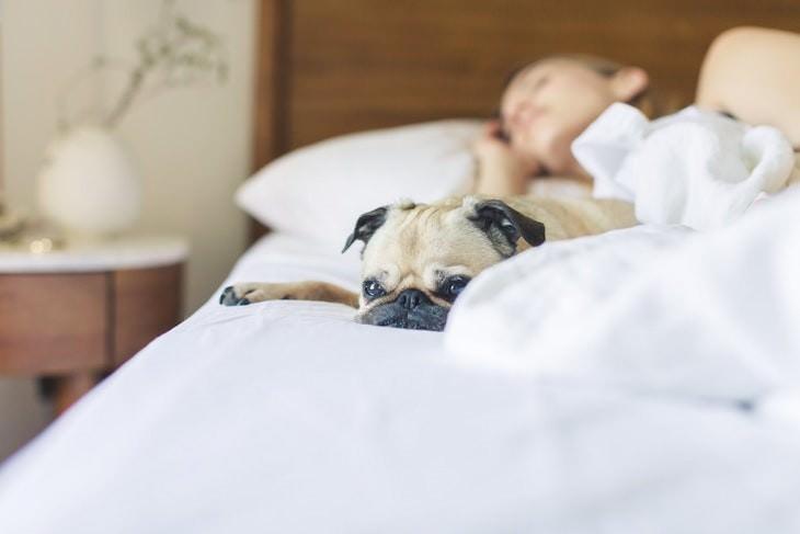 Habitos Raros Que Son Buenos Para La Salud Dormir con tus mascotas