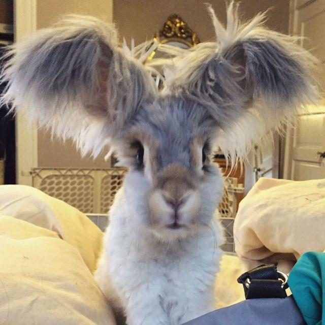 15 Lindos Animales Conejito con orejas grandes