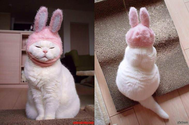 Animales Usando Sombreros Gato con gorro de conejo