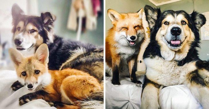 perritos juntos