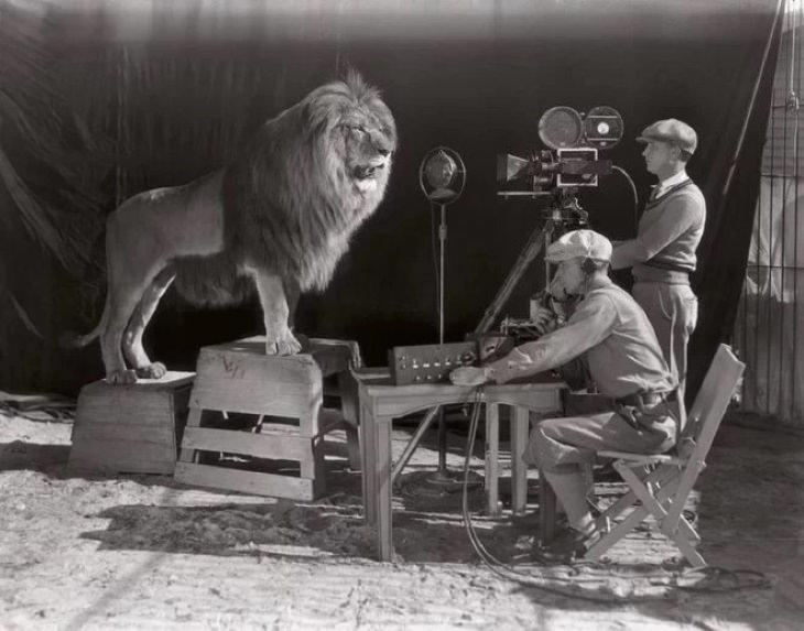 Fotos Detrás De Escenas De Películas Famosas El famoso león de MGM fue filmado con un león real