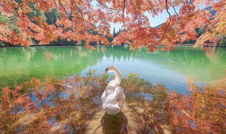 Fotos Ganadoras De La Naturaleza 2020 Belleza mirando hacia atrás por Asuka Inukai