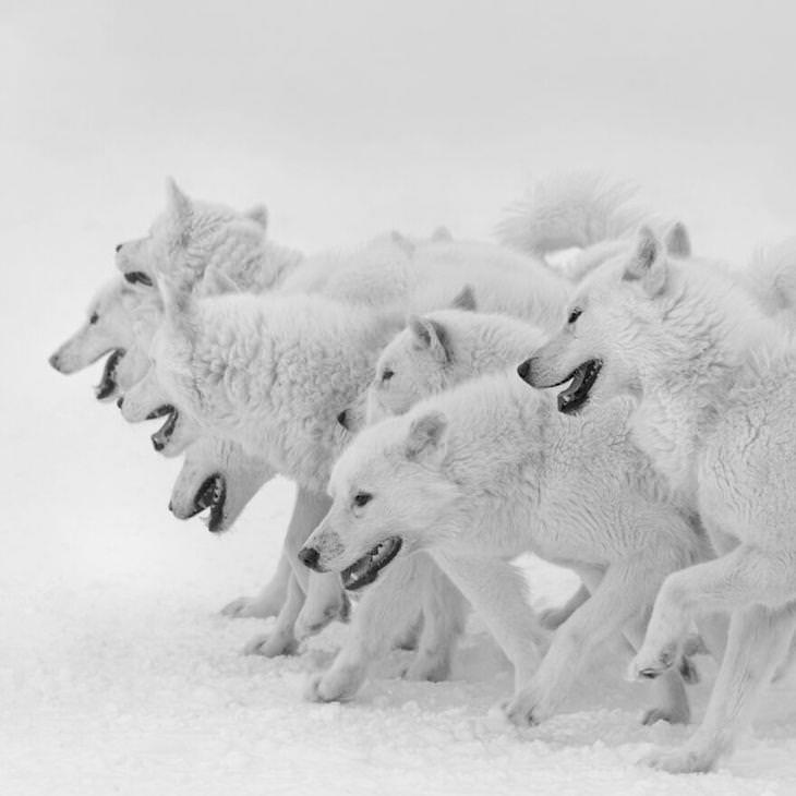 Fotos Ganadoras De La Naturaleza 2020 Devoción por Patrick Ems