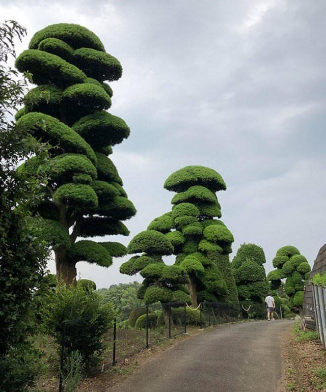 Lugares Espectaculares Un jardín de árboles gigantes en Japón