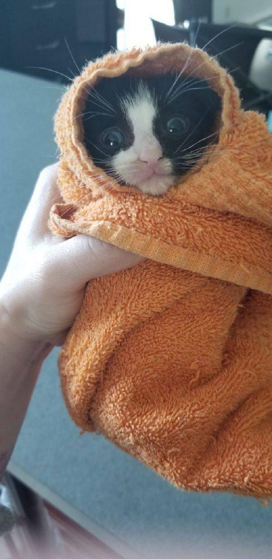 Animales Divertidos Gato envuelto en toalla