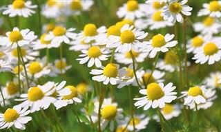 7 Posts Plantas Medicinales