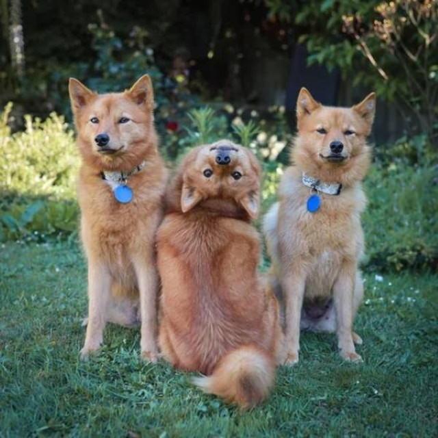 Fotos De Animales Tomadas En El Momento Perfecto perro con la cabeza al revés