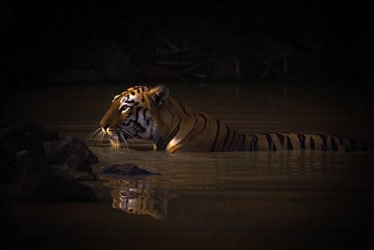 """Fotos Ganadoras Premios De La Naturaleza Ganador de Retratos de animales: """"La hora del baño"""" de Nick Dale (Reino Unido)"""