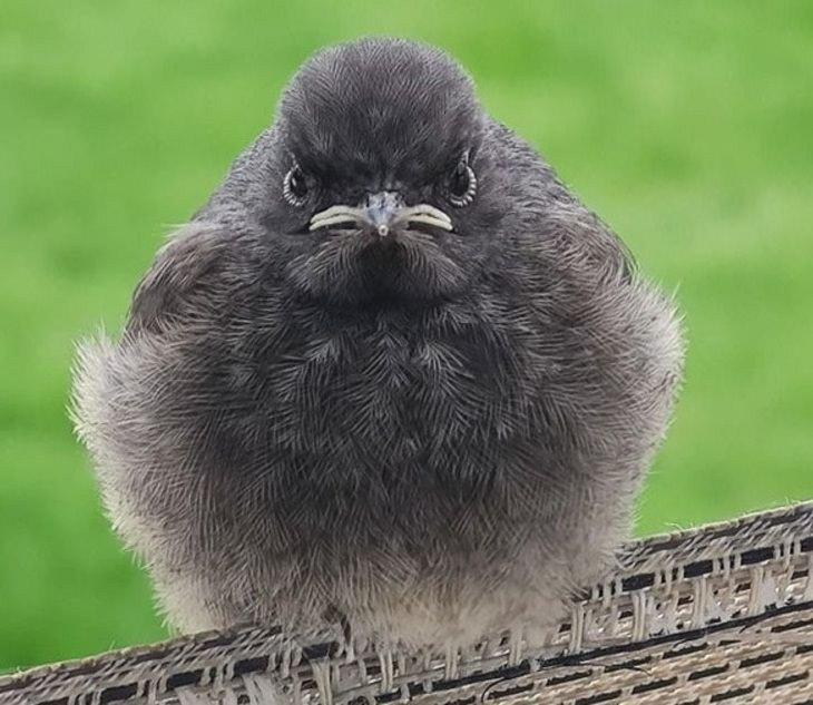 Divertidas De Animales Con Reacciones Graciosas Pájaro enojado