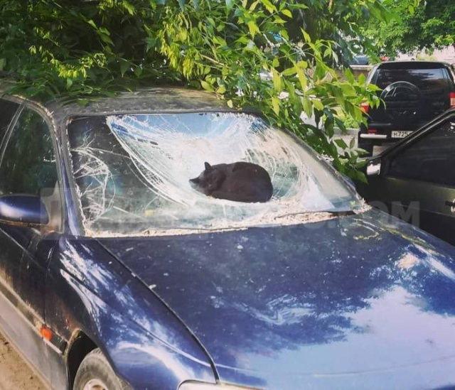 Gatos Que Se Sientan Donde Quieren Gato durmiendo sobre un cristal de un auto roto