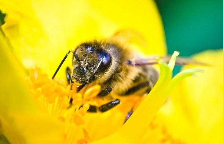 15 Fotos Macro De La Naturaleza Retrato de abeja