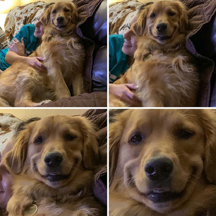 15 Dulces Fotos De Perros Con Las Sonrisas Más Alegres Perro sonriendo acercamiento