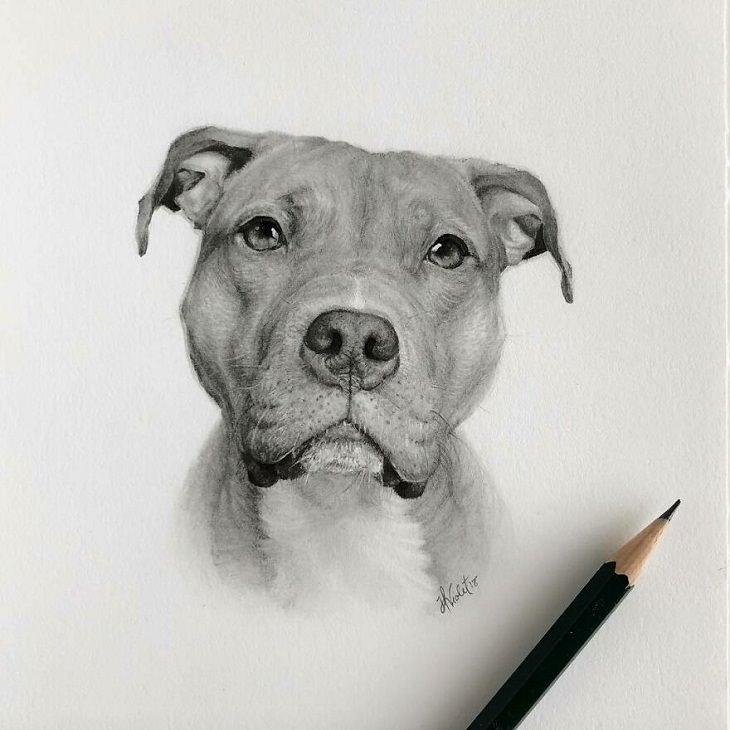 Retratos Hiperrealistas De Animales Perro con rostro triste